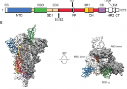 Sequence map of spike protein, with highlighted monomers